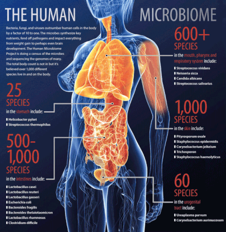 Your Glorious Gut – Introduction to the Human Microbiome (CP)
