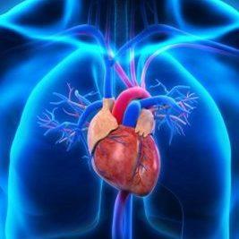 Adult Echocardiography <br> Application Fee<br>